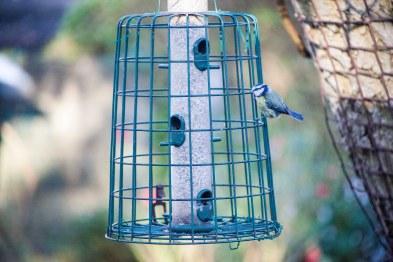 Birdie at 2000