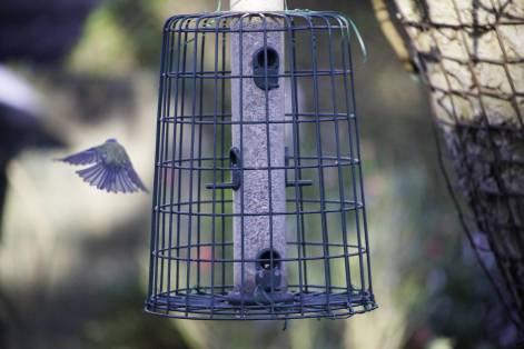 flyaway birdy (3)