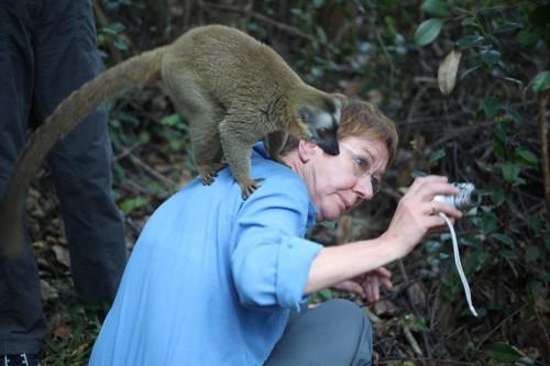 Lemur the photographer