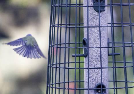 Small flyaway birdy (3)