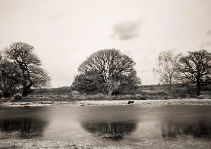 Infra red new forest 0115