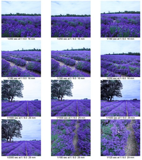 Lavender contact 2