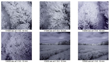 Lavender infra red contact2