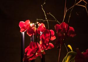 _MG_2383flowers
