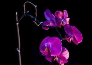 _MG_2436flowers lamp