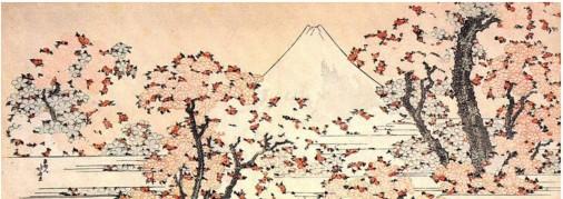 Mount Fufi through cherry blossom